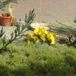 Viráglopásra szakosodtak