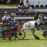 Világbajnok lovakat avattak Mezőhegyesen