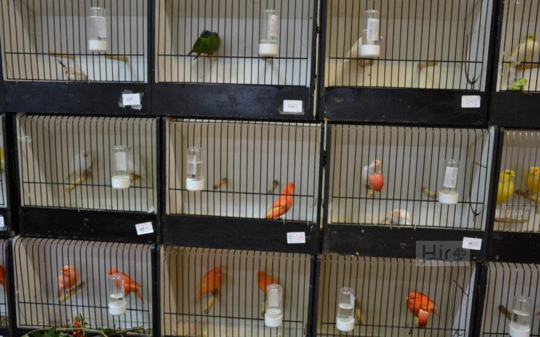 madárkiállítás szentes