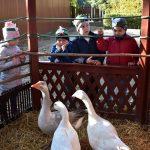 Az ovisok is megünnepelték a hagyományos Márton Napot