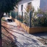 Közlemény – kóbor kutyák ügyében