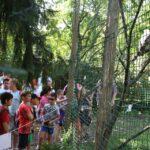 Félszáz gyermek látogatta meg a helyi madármentőket
