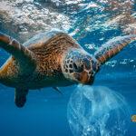 Így hat a műanyagszennyezés az életünkre