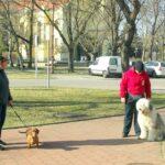 Kutyás tréning a belvárosban