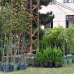 Önkormányzati támogatás a fásszárú növény pótlásához