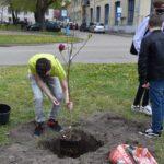 Ballagási hangulatot idézve ültettek fát a katolikus iskola diákjai
