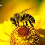 A méhek védelme – napelemparkok