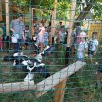 A csongrádi gyermekek is rendszeresen jönnek a vadvédelmi központba