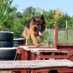 Gyorsasági akadályverseny – kutyáknak